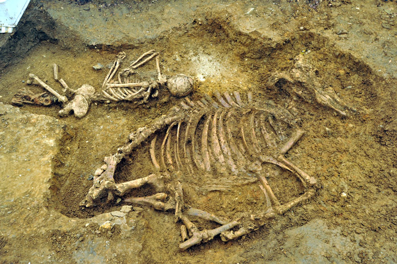 Anglo-Saxons were often buried with everything they would need after death. In this case the dead woman's family thought she would need her cow on the other side.