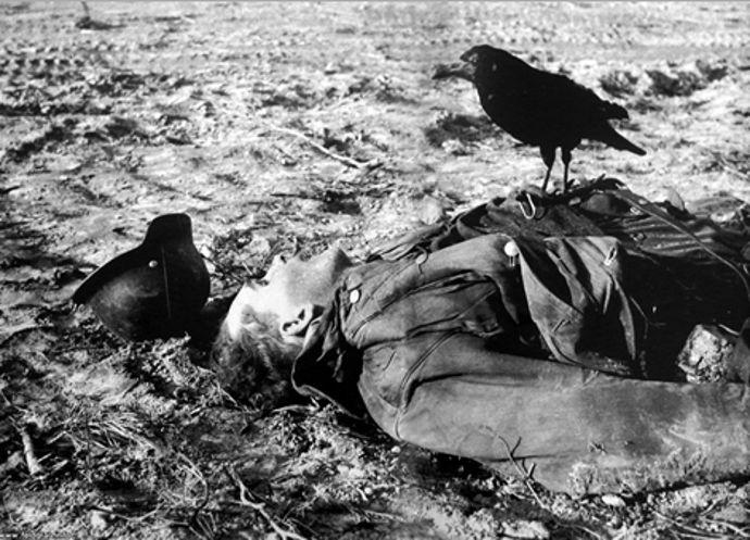 dead-w-crow