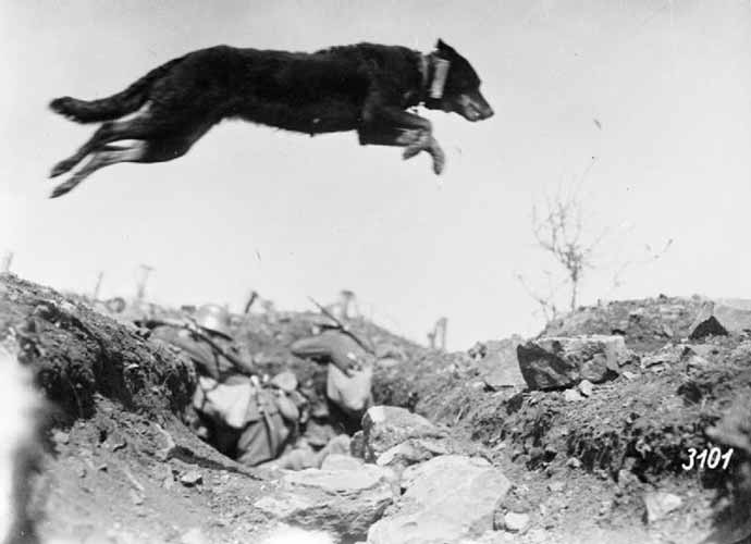 german-messenger-dog