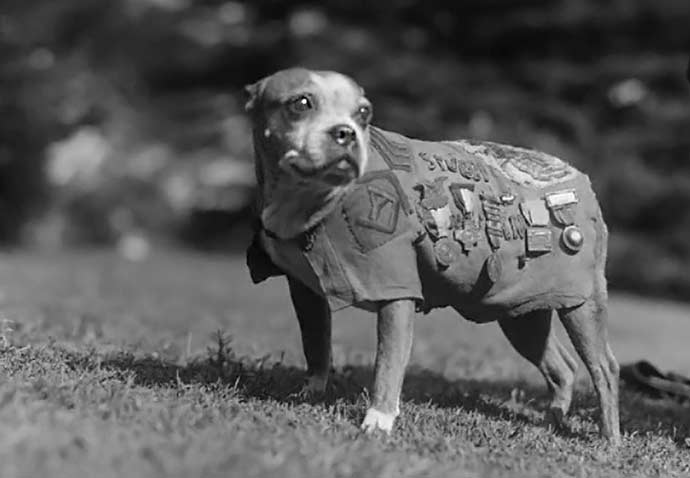 sergeant-stubby-ww1