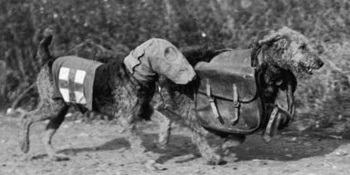 war-dogs-ww1