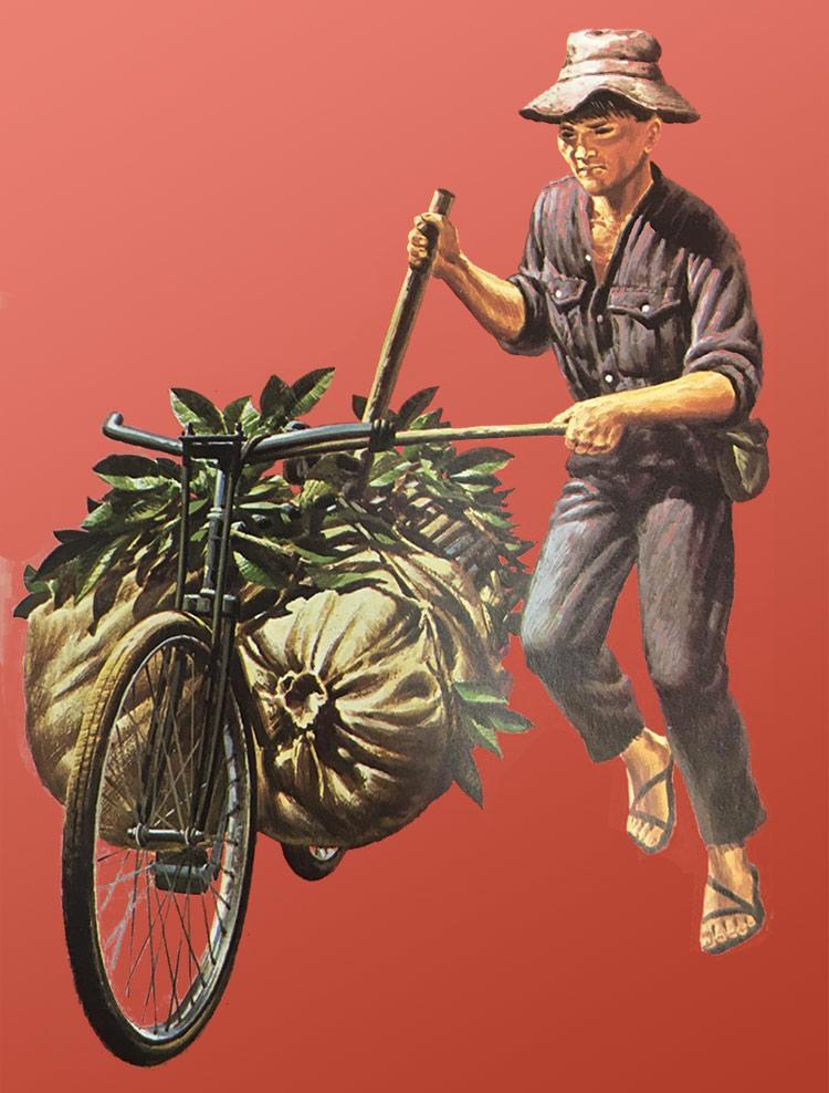 Vietcong Porter Vietnam War