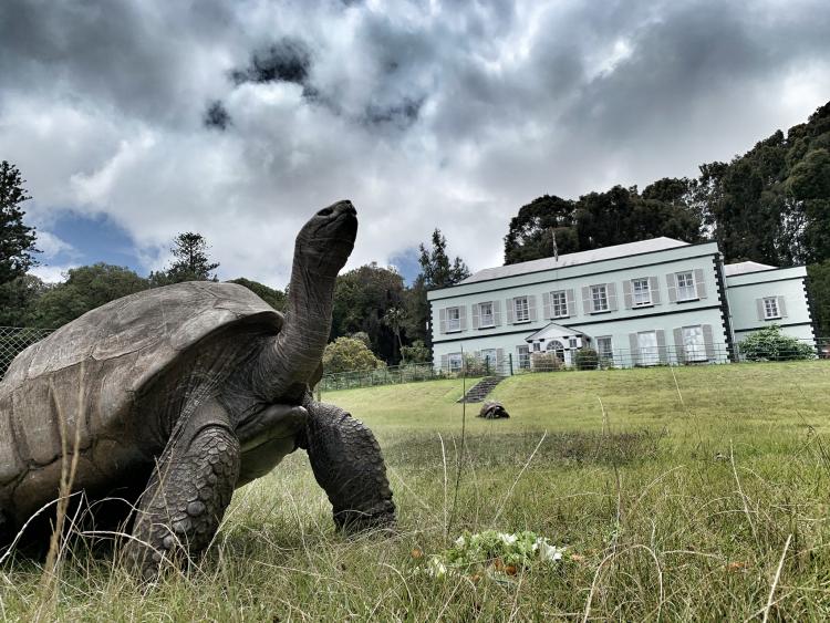 Johnathan, the giant tortoise